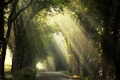 Picture morning, trees, light, road, nature