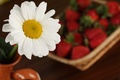 Picture flowers, macro, Daisy, strawberry