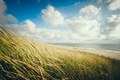 Picture horizon, shore, beach, spikelets, sea, the sky, grass, clouds