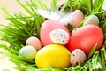 Picture Socket, Eggs, photo, Feathers, Holidays, Easter