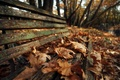 Picture bench, autumn, leaves