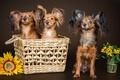 Picture trio, shaggy, dogs