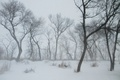 Picture blizzard, snow, snow, winter, frost, trees, Blizzard, Nature, trees, winter