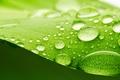 Picture surface, green, widescreen, refraction, widescreen, light, blur, leaf, bokeh, full screen, drops, HD wallpapers., water