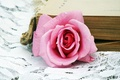 Picture pink, pink, Rose, book, rose, book