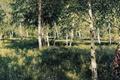 Picture picture, Levitan, Birch grove