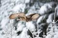 Picture flight, snow, winter, owl, nature, bird