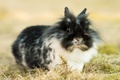 Picture rabbit, grass, fluffy