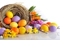 Picture flowers, eggs, flowers, eggs, Easter, Easter, daffodils