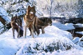Picture winter, forest, snow, river, art, wolves, Richard Luce