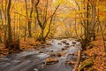Picture woodland, water, autumn, autumn colors, fall, autumn palette, fall palette, leaves, fall colors, river, rocks, ...