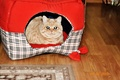 Picture mrrr, max, cat