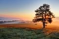 Picture field, fog, tree, dawn, hills