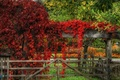 Picture red, Autumn, autumn, red, leaves, fall, leaves