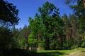 Picture tree, foliage, oak, nature