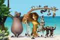 Picture new, palm trees, Madagascar, madagascar 3, monkey, penguins, Hippo, cartoon, sea, three, Zebra, new, Leo, ...