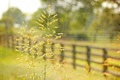 Picture style, macro, the fence, grass