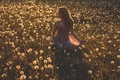 Picture dress, shadows, shadow, girl, flower field, field of flower, girl, field, field, dress
