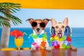 Picture flowers, sea, bar, dogs, Palma, glasses, wreaths
