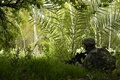 Picture equipment, grass, machine, Soldiers, forest