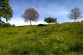 Picture white, graze, trees, grass, black, hill, meadow, switzerland, cows, sunny