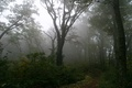 Picture forest, fog, tree, path