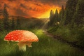 Picture grass, the sky, summer, path, wolves, trees, mushroom, clouds, red, forest, mushroom, the rays of ...