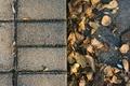 Picture shadows, leaves, fall, autumn, leaves, shadows, texture, autumn, texture
