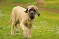 Picture dog, walk, field