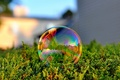 Picture photo, soap bubble, macro, color, Bubble, reflection, grass, green