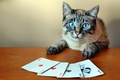 Picture Kare, card, cat