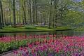 Picture flowers, Keukenhof, Park, Lisse, trees, tulips, Netherlands, grass, pond