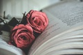 Picture book, roses, flowers