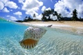 Picture ocean, Tahiti, shell, floating, blue lagoon, clear water