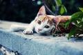 Picture look, foot, background, Koshak, Tomcat, cat