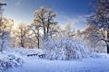 Picture bridge, snow, the bridge, nature, winter, trees, the bushes, branches