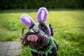 Picture dog, ears, dog, language