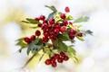 Picture bokeh, berries, branch, red, leaves