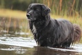 Picture dog, water, dog