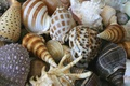 Picture sea, summer, shell, shell