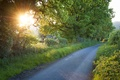 Picture the sun, foliage, rays, road, trees, herbs