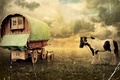 Picture horse, old photo, wagon, vintage, cans