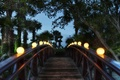 Picture lights, palm trees, the evening, bridge