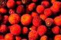 Picture seeded drupe, strawberry tree, arbutus, fruit
