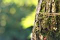 Picture macro, tree, owl, blur, key, bark, chain, suspension, bokeh, metal