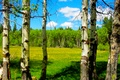 Picture flowers, USA, aspen, trees, oregon, birch, meadow, spring, clouds, the sky, forest