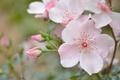 Picture tenderness, pink, briar, macro, drops
