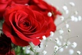 Picture macro, flowers, rose