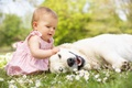 Picture dog, flowers, flowers, child, game, childhood, dog, child, grass, play, happy, childhood, mode, beautiful little ...