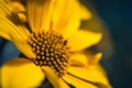 Picture petals, yellow, flower